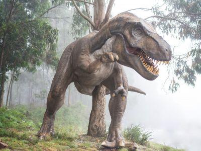 Как узнали про динозавров