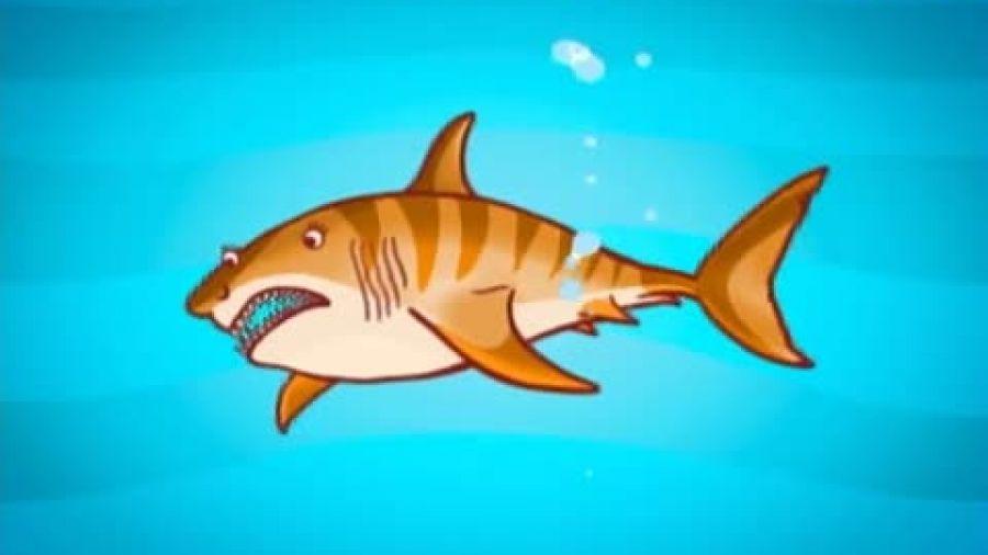 Выпуск 215 «Разновидности акул». Видео 3