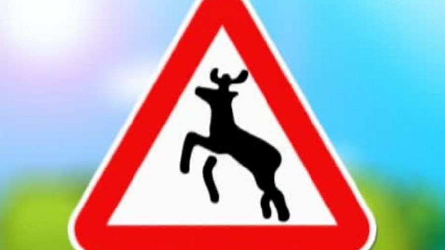 Знак «Дикие животные»
