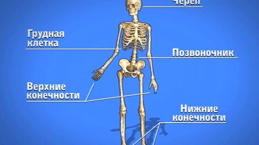 В гостях у Витаминки. Выпуск 14. Скелет