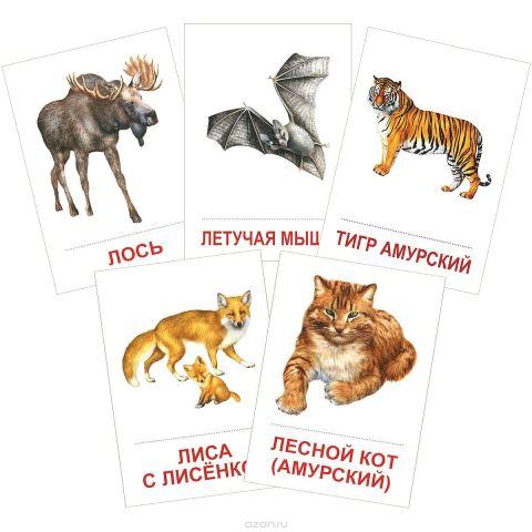 Дикие животные (набор из 16 карточек)
